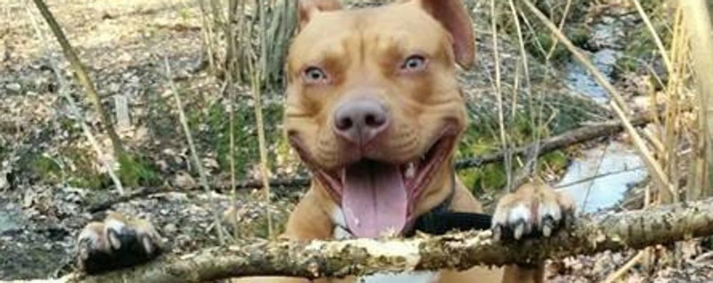 Cani al parco, ma solo con il guinzaglio  Il divieto dopo l'aggressione del pitbull