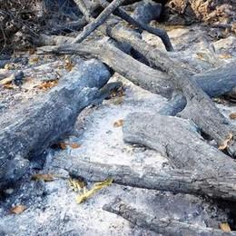 Boschi, l'appello dopo gli incendi  «Altro che alberi: più volontari»