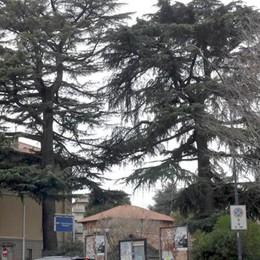 La protesta blocca l'abbattimento Erba, nuove verifiche sui cedri