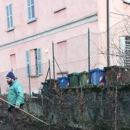 Furto verde in via Bellinzona  Rubati 13 carpini dai giardinetti
