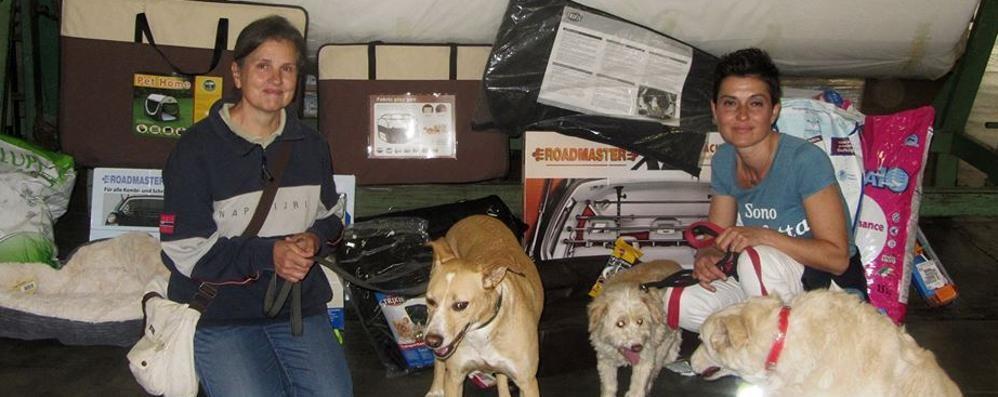 Cani abbandonati dal Sud  L'allarme arriva in Brianza