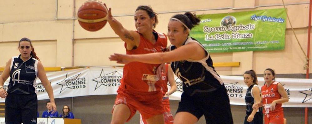 La storia di Donvito, sommelier-play «Se posso gioco nel Basket Como»
