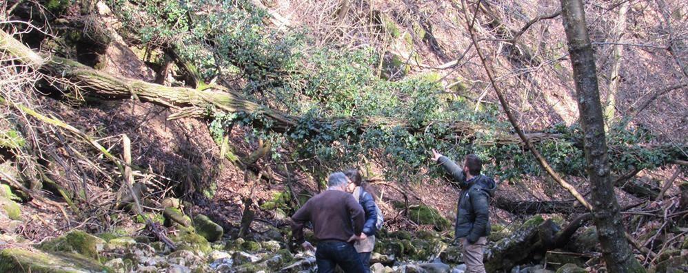 Dai detriti alle sponde rovinate   Il torrente Cosia preoccupa Albese