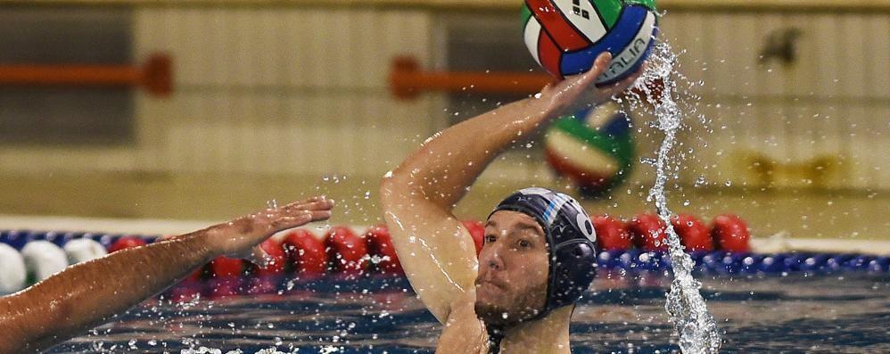 Pallanuoto Como senza Trumbic  Como Nuoto: speedy Mandaglio