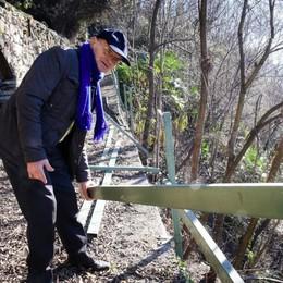 Pianta svizzera cade a Maslianico  E diventa un caso internazionale