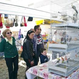 Grandate, 5mila visitatori  alla fiera degli uccelli