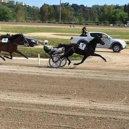 Il cavallo di Lanzo d'Intelvi  trionfa nella corsa di Agnano