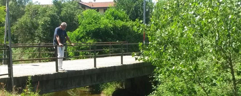 Moria di pesci, giallo a Bulgaro  «Torrente Lura da analizzare»
