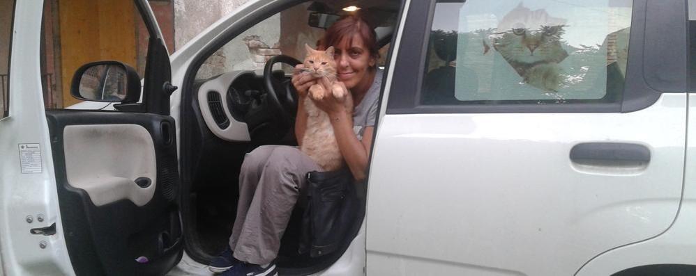 Fa 75 chilometri al giorno  per dare da mangiare ai gatti