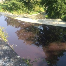 Fino, allarme inquinamento  Viola la acque del Seveso