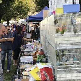Canzo, 5mila per gli uccelli  Alla larga i venditori abusivi