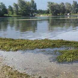 Sorico invasa delle alghe  «È colpa del troppo caldo»