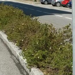 Gli arbusti impediscono di vedere  Una petizione per eliminarla