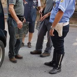 Canzo, cardellini e fringuello sequestrati  Scontro tra animalisti Meta e cacciatori