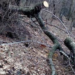 """Bisbino, rifugio """"muto"""" per 15 giorni  Niente telefono per il crollo degli alberi"""