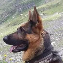 I bracconieri nella riserva  Cane ucciso da una trappola