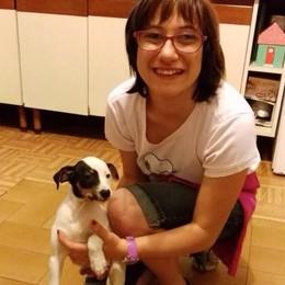 Colverde, avvelenato cagnolino  con un boccone in giardino