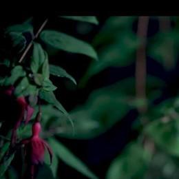 Il film di Orticolario   Immagini suggestive