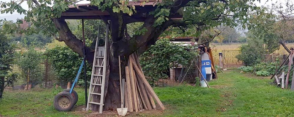 Ladri nel capanno degli artisti  Dopo i conigli rubano pure la scala