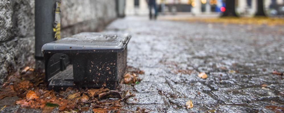 Topi, allarme in centro  Piazza Roma è invasa  I residenti: «Sono enormi»