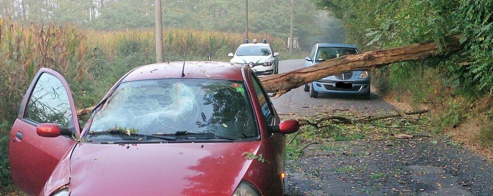 Albero cade sull'auto in transito  Il conducente salvo per miracolo