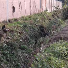 Anche le galline nella Roggia sporca  «Mariano rischio allagamenti»