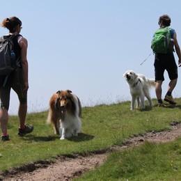 In montagna con i cani Primo trofeo Chiarella