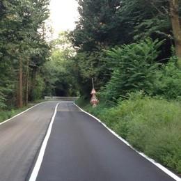 Il puma è riapparso ad Asnago  «Mi ha tagliato la strada»