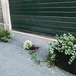 Altro blitz dei vandali  nella notte a Cantù