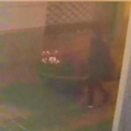 Cantù, i video incastrano il vandalo  Una donna distruggeva le fioriere