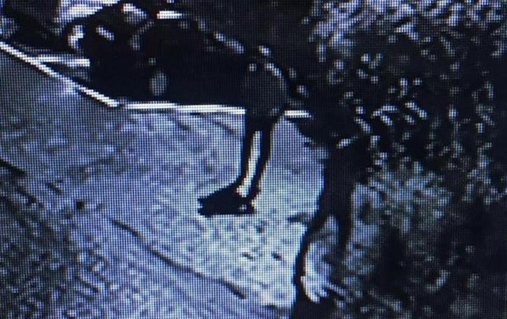 Alzate, ecco i ladri per la quarta volta  Scatta l'antifurto e i vicini li inseguono