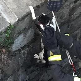 Intrappolato nella darsena Gatto salvato a Villa Olmo