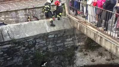 Villa Olmo, gatto salvato dai vigili del fuoco