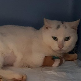Gattino ferito e lasciato in strada  Raccolta fondi sul web per le cure