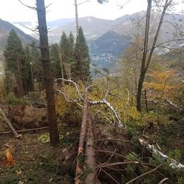 Moltrasio, alberi pericolanti da rimuovere  Vecchia Regina chiusa tre giorni
