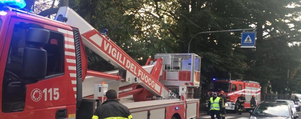 Olgiate, rami caduti sulla fermata dei bus  «Piante pericolose, vanno potate»