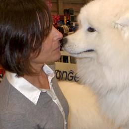 Erba, dagli alani ai segugi  La mostra al gran finale  elegge il cane più bello