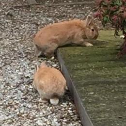 I conigli tra le tombe   dividono Lipomo  «Che nessuno li tocchi»