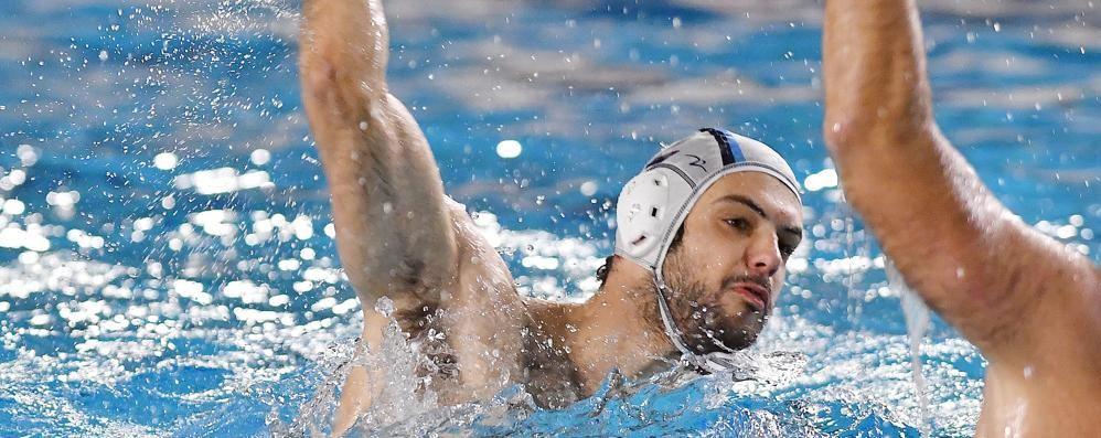 A2, Como Nuoto in casa  Va all'attacco del Padova