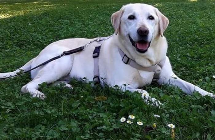 Villa Guardia: il cane Brina