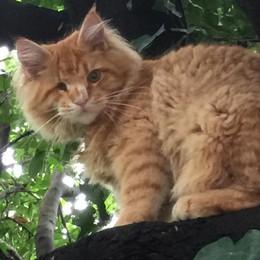 Villa Guardia: altro che cani e gatti  «Ecco come il labrador   ha salvato il suo amico»
