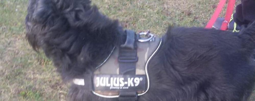 Tre dobermann azzannano un cane  «Erano liberi, hanno ferito il mio Nek»