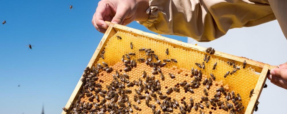 Europarlamento in campo per proteggere qualità miele e api