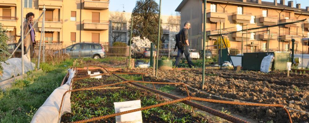 Degrado e disordine  negli orti comunali di Cantù
