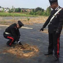Rubava piante da frutta  ad Appiano: arrestato