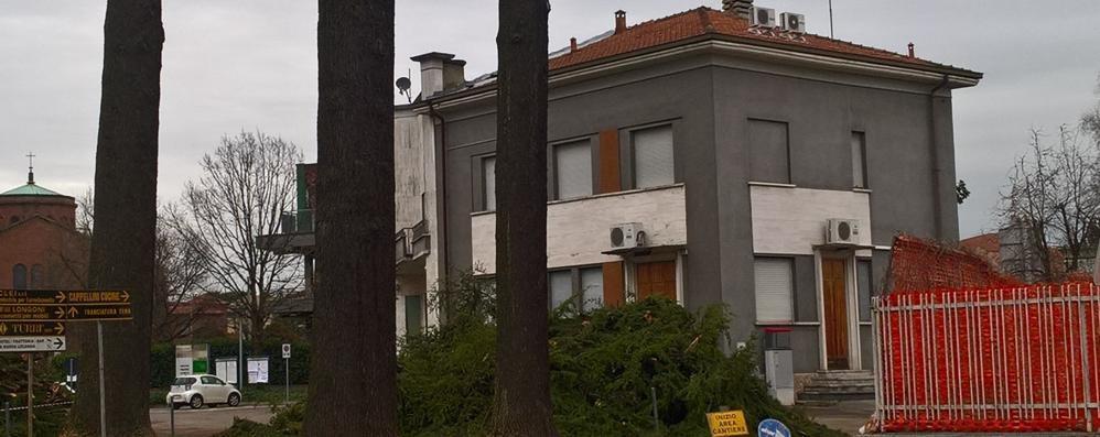 Carugo, giù i tre cedri secolari  Nuovi edifici al posteggio