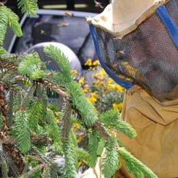 Vertemate: «Diventa apicoltore»  Corso per disoccupati under 35