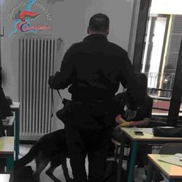 Spaccio marijuana a scuola  Arrestata studentessa