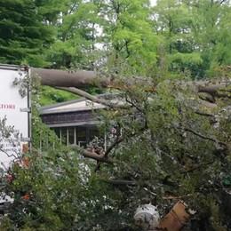 Vigili del fuoco a Cernobbio  Albero crolla su camion a Villa Erba