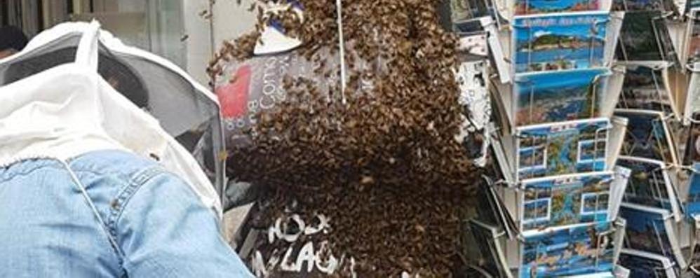 Sciame d'api nei portici di via Plinio La regina si stabilisce nell'edicola